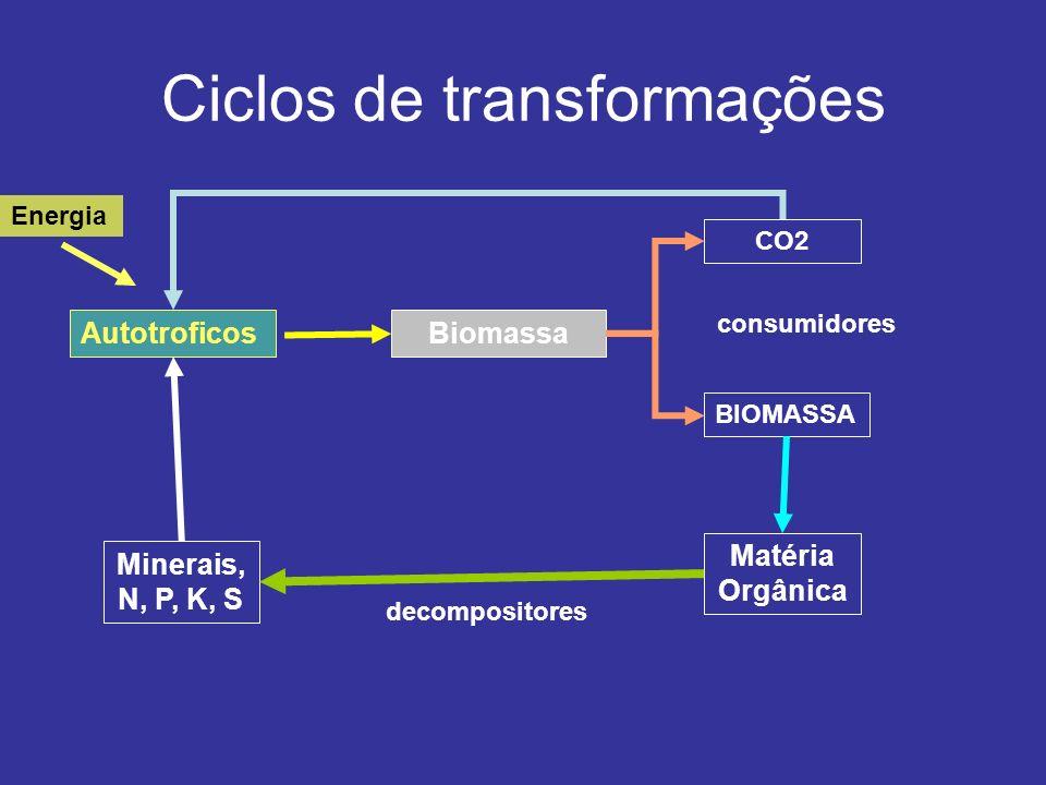 Ciclos de transformações AutotroficosBiomassa CO2 BIOMASSA Matéria Orgânica Minerais, N, P, K, S Energia decompositores consumidores