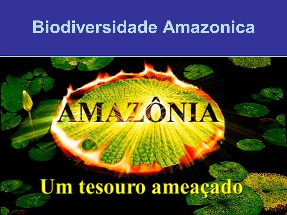 Biodiversidade Amazonica