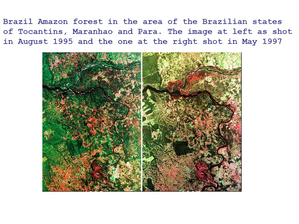 Brazil Amazon forest in the area of the Brazilian states of Tocantins, Maranhao and Para.