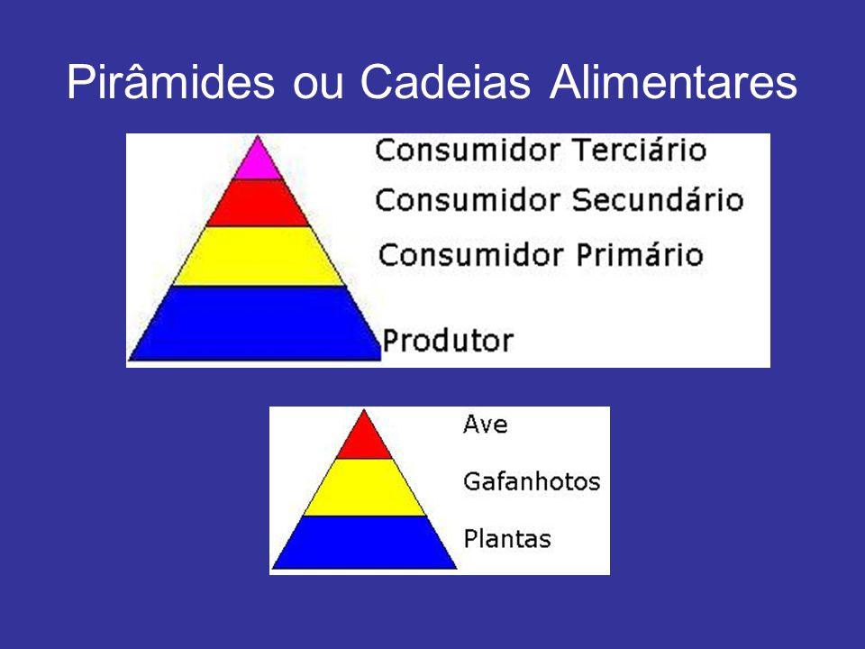 Pirâmides ou Cadeias Alimentares