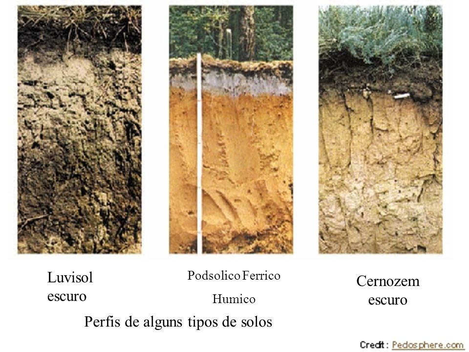 Luvisol escuro Podsolico Ferrico Humico Cernozem escuro Perfis de alguns tipos de solos