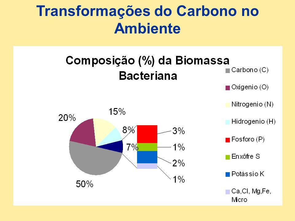 Transformações do Carbono no Ambiente