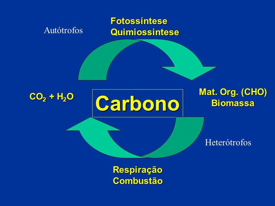 Carbono FotossínteseQuimiossintese RespiraçãoCombustão Mat. Org. (CHO) Biomassa CO 2 + H 2 O Autótrofos Heterótrofos