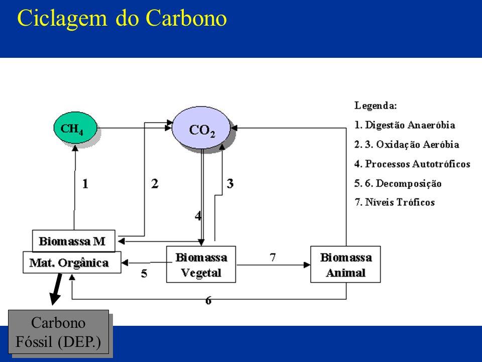 Ciclagem do Carbono Carbono Fóssil (DEP.)