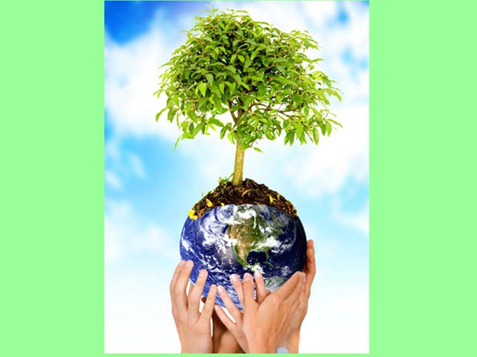 Sustentabilidade Os pontos centrais do conceito de desenvolvimento sustentável elaborados pela CMMAD e contidos no relatório Nosso Futuro Comum (WCED, 1991) e que se tornaram a linha mestra da Agenda 21: ...