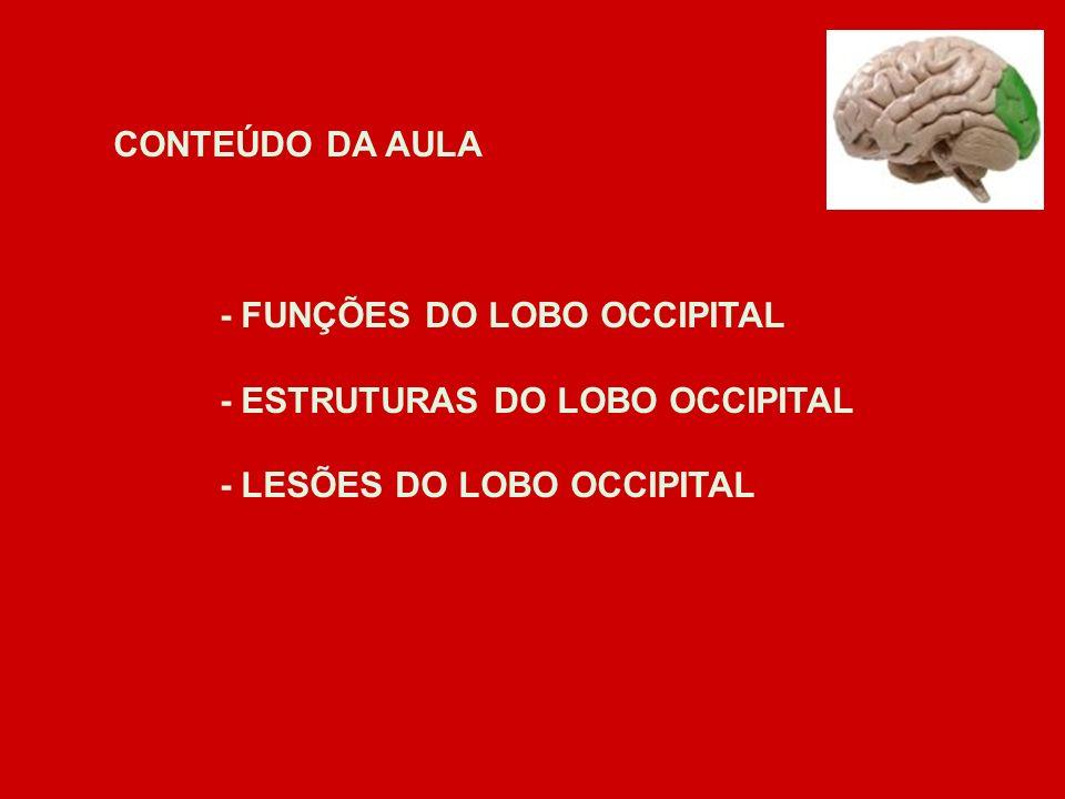 CONTEÚDO DA AULA - FUNÇÕES DO LOBO OCCIPITAL - ESTRUTURAS DO LOBO OCCIPITAL - LESÕES DO LOBO OCCIPITAL