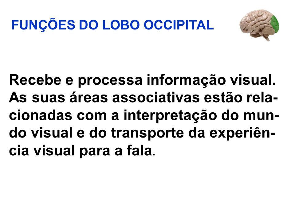 Recebe e processa informação visual. As suas áreas associativas estão rela- cionadas com a interpretação do mun- do visual e do transporte da experiên