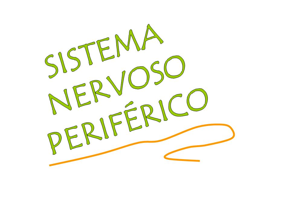 SISTEMA NERVOSO PERIFÉRICO SOMÁTICOVISCERAL AFERENTEEFERENTEAFERENTEEFERENTE MOTRICIDADE VOLUNTÁRIA E SENSORIAL CONSCIENTE SISTEMA NERVOSO AUTÔNOMO SIMPÁTICO PARASSIM- PÁTICO