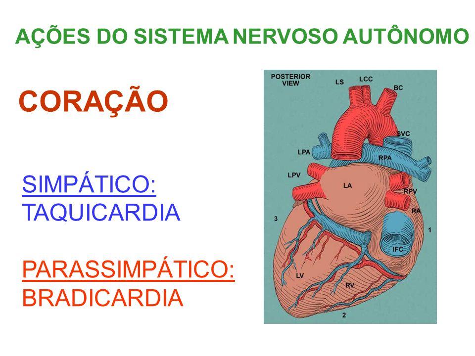AÇÕES DO SISTEMA NERVOSO AUTÔNOMO SIMPÁTICO: TAQUICARDIA PARASSIMPÁTICO: BRADICARDIA CORAÇÃO