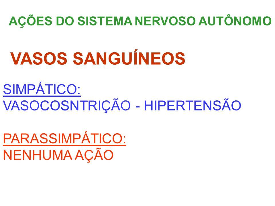 AÇÕES DO SISTEMA NERVOSO AUTÔNOMO SIMPÁTICO: VASOCOSNTRIÇÃO - HIPERTENSÃO PARASSIMPÁTICO: NENHUMA AÇÃO VASOS SANGUÍNEOS