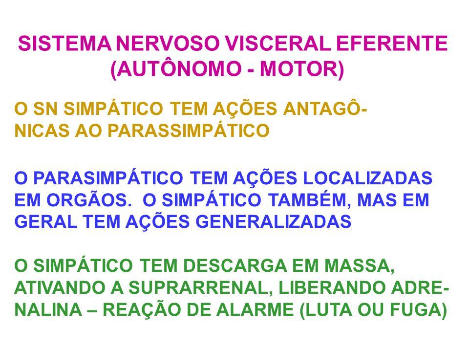 SISTEMA NERVOSO VISCERAL EFERENTE (AUTÔNOMO - MOTOR) O SN SIMPÁTICO TEM AÇÕES ANTAGÔ- NICAS AO PARASSIMPÁTICO O PARASIMPÁTICO TEM AÇÕES LOCALIZADAS EM