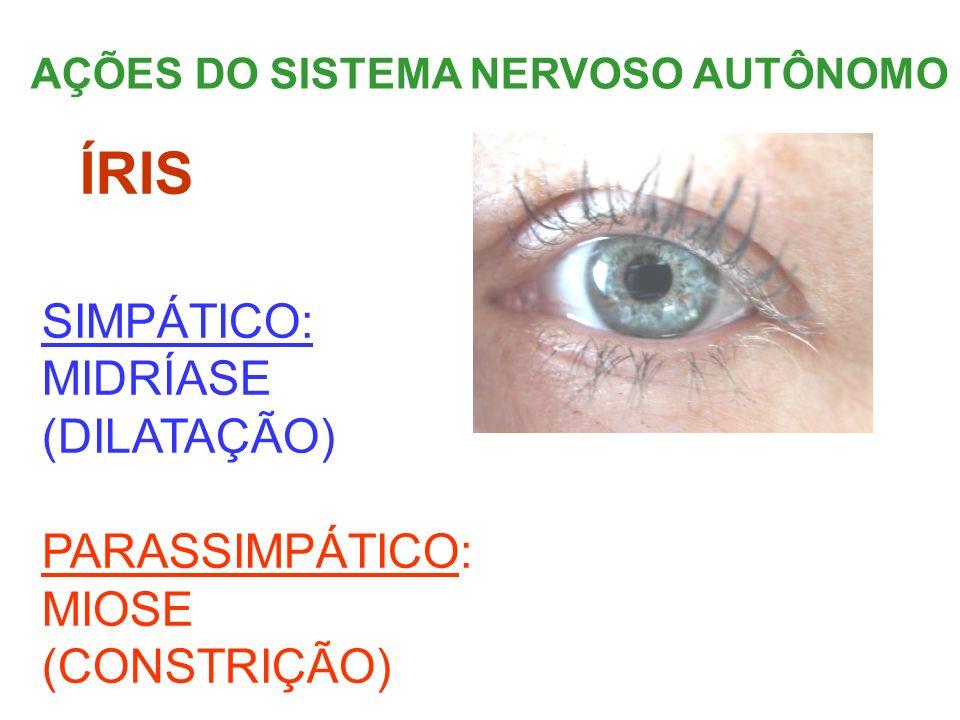AÇÕES DO SISTEMA NERVOSO AUTÔNOMO ÍRIS SIMPÁTICO: MIDRÍASE (DILATAÇÃO) PARASSIMPÁTICO: MIOSE (CONSTRIÇÃO)