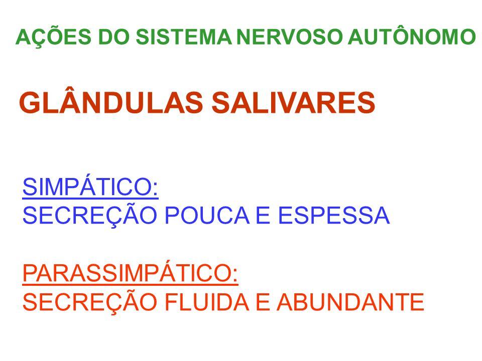 AÇÕES DO SISTEMA NERVOSO AUTÔNOMO SIMPÁTICO: SECREÇÃO POUCA E ESPESSA PARASSIMPÁTICO: SECREÇÃO FLUIDA E ABUNDANTE GLÂNDULAS SALIVARES