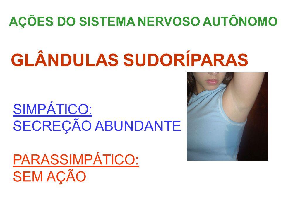 AÇÕES DO SISTEMA NERVOSO AUTÔNOMO SIMPÁTICO: SECREÇÃO ABUNDANTE PARASSIMPÁTICO: SEM AÇÃO GLÂNDULAS SUDORÍPARAS