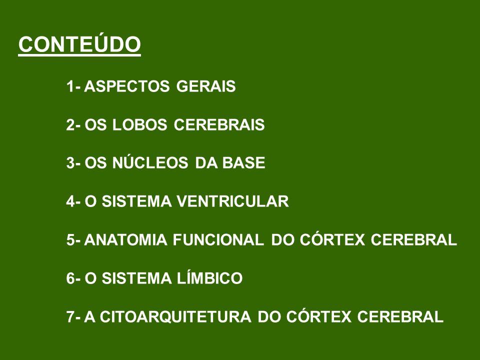 SULCO CENTRAL SULCO LATERAL PRINCIPAIS CISURAS CEREBRAIS