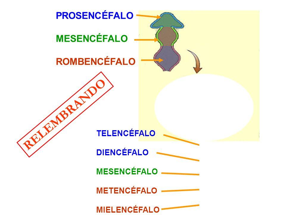 2 – DEMÊNCIA ESTADO DE PROGRESSIVA DETERIORAÇÃO COGNITIVA E COMPORTAMENTAL CAUSADO POR DOENÇAS DEGE- NERATIVAS (ALZHEIMER,DOENÇA CÉREBRO-VASCULAR) OU POR LESÕES CEREBRAIS GRAVES