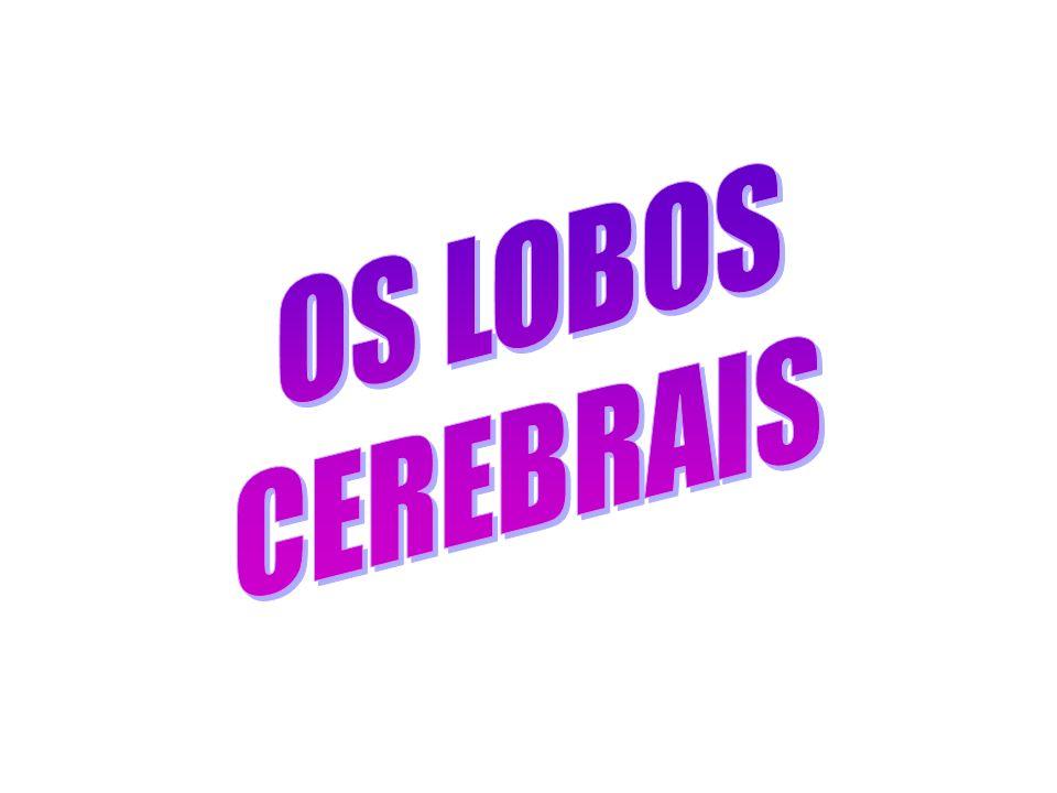 TELENCÉFALO LOBOS CEREBRAIS FRONTAL TEMPORAL OCCIPITAL PARIETAL ÍNSULA