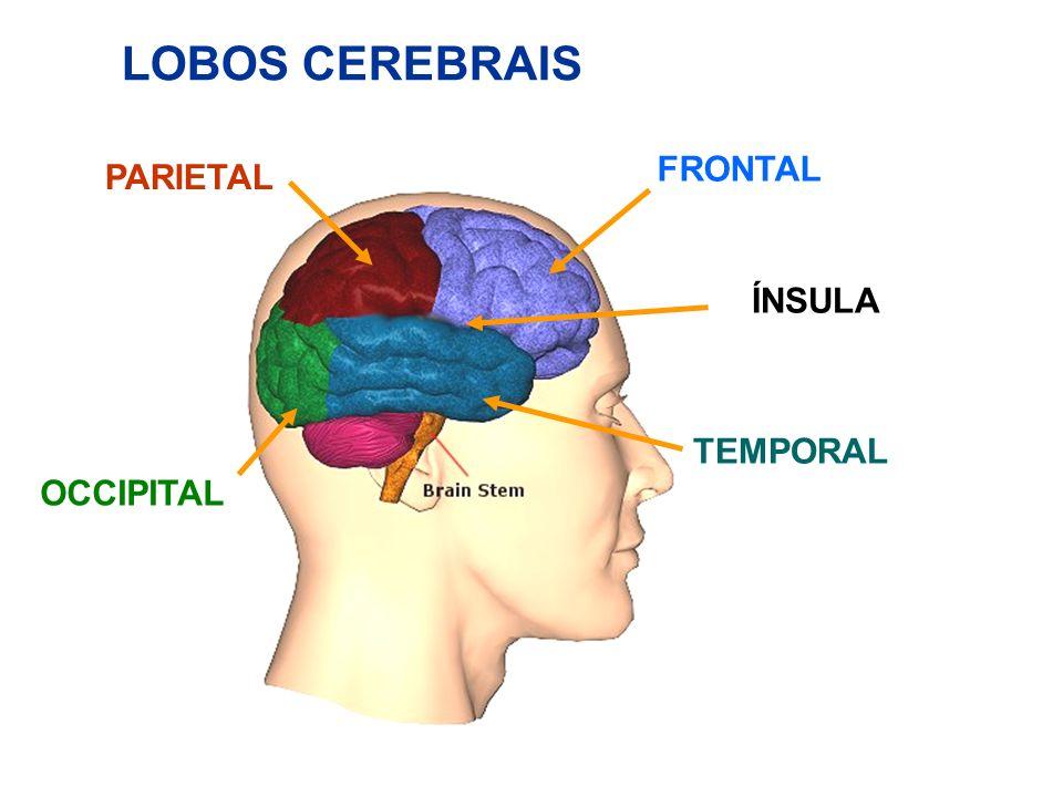 Brain Functions and MapMap español Robert P.Lehr Jr., Ph.D.