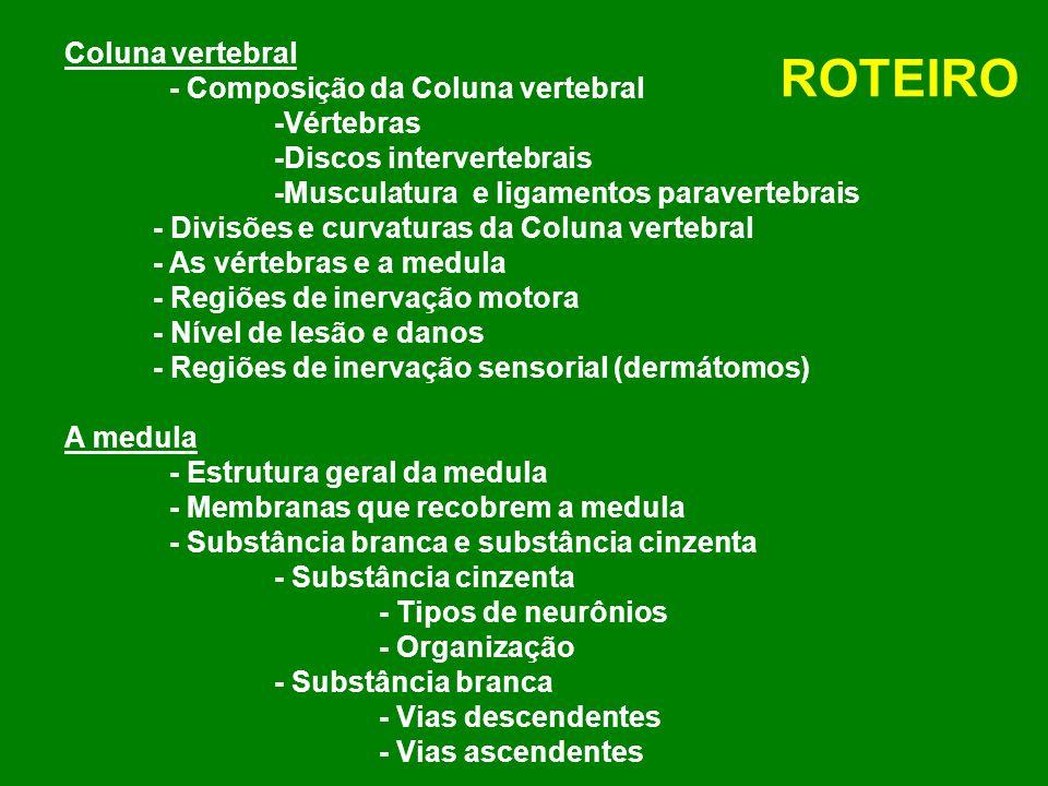 Coluna vertebral - Composição da Coluna vertebral -Vértebras -Discos intervertebrais -Musculatura e ligamentos paravertebrais - Divisões e curvaturas