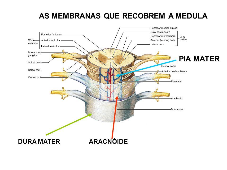 AS MEMBRANAS QUE RECOBREM A MEDULA DURA MATERARACNÓIDE PIA MATER