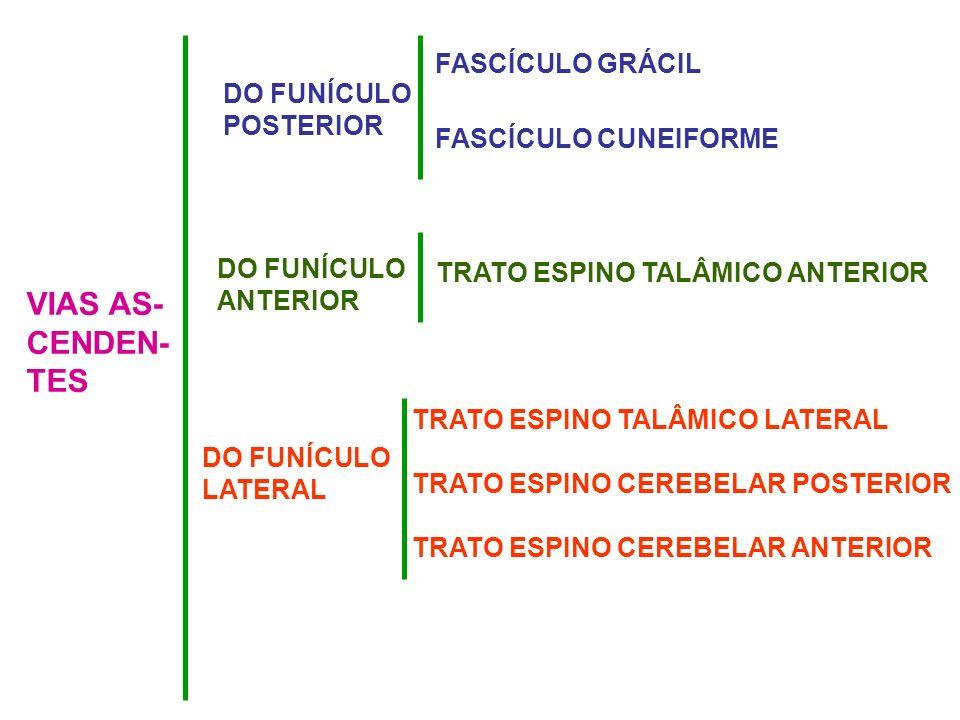 VIAS AS- CENDEN- TES DO FUNÍCULO POSTERIOR FASCÍCULO GRÁCIL FASCÍCULO CUNEIFORME DO FUNÍCULO ANTERIOR TRATO ESPINO TALÂMICO ANTERIOR DO FUNÍCULO LATER