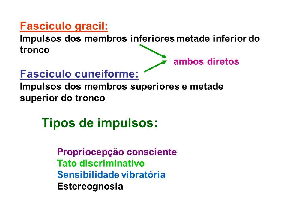 Fasciculo gracil: Impulsos dos membros inferiores metade inferior do tronco ambos diretos Fasciculo cuneiforme: Impulsos dos membros superiores e meta