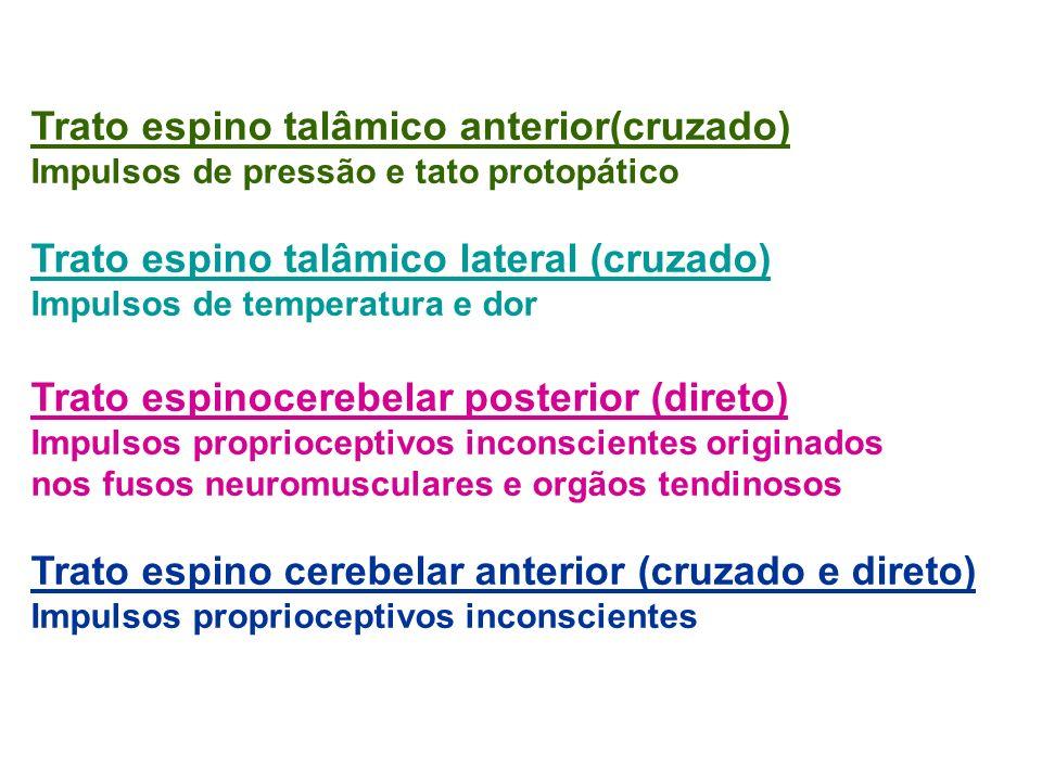 Trato espino talâmico anterior(cruzado) Impulsos de pressão e tato protopático Trato espino talâmico lateral (cruzado) Impulsos de temperatura e dor T