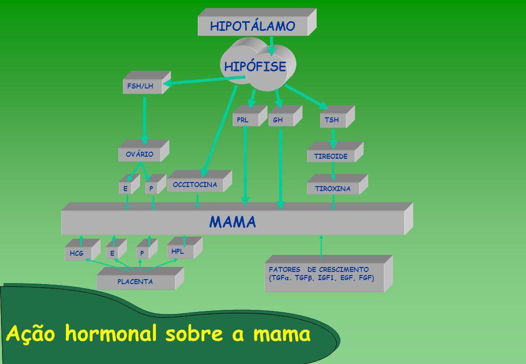 PE Ação hormonal sobre a mama HIPOTÁLAMO HIPÓFISE FSH/LH PRLGHTSH OVÁRIO TIREOIDE TIROXINA MAMA HPL PLACENTA FATORES DE CRESCIMENTO (TGF. TGF, IGF1, E