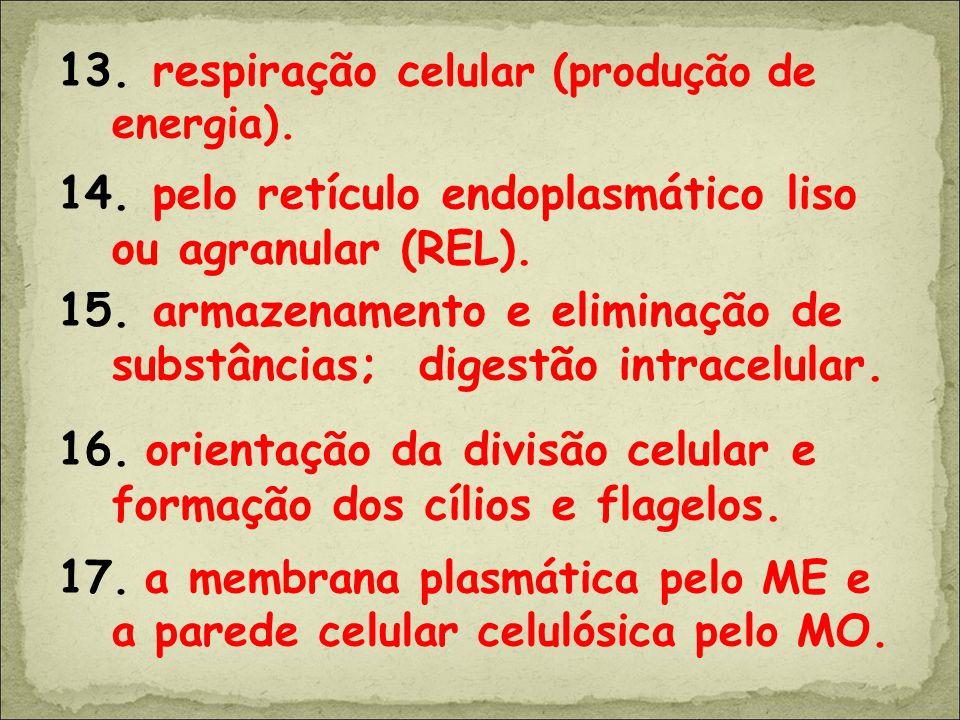 13. respiração c elular (produção de energia). 14. pelo retículo endoplasmático liso ou agranular (REL). 15. armazenamento e eliminação de substâncias