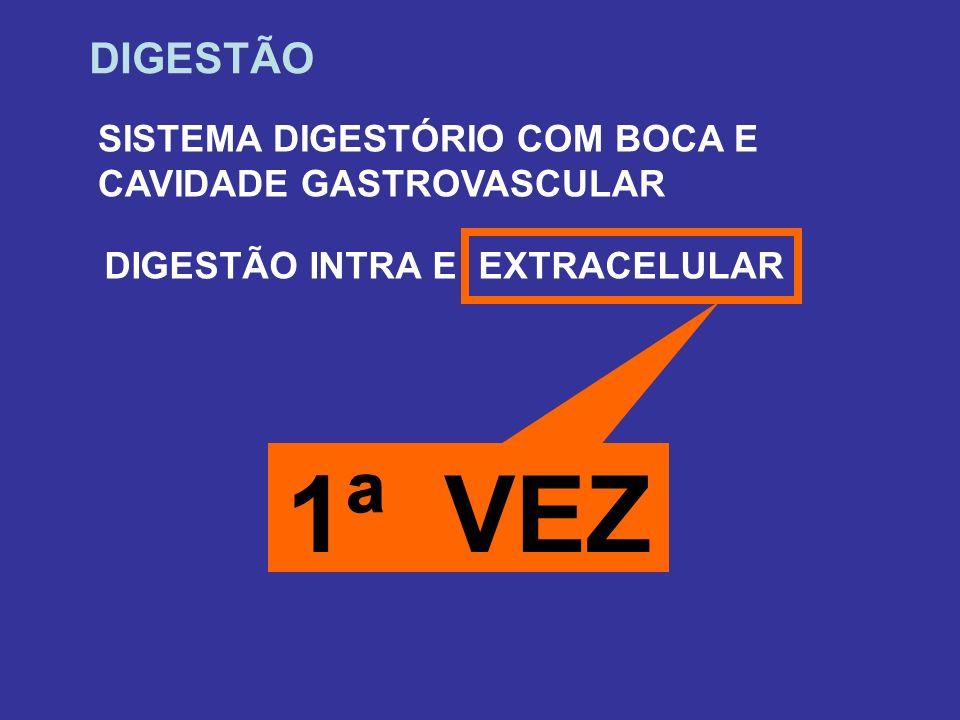 DIGESTÃO SISTEMA DIGESTÓRIO COM BOCA E CAVIDADE GASTROVASCULAR DIGESTÃO INTRA E EXTRACELULAR 1ª VEZ