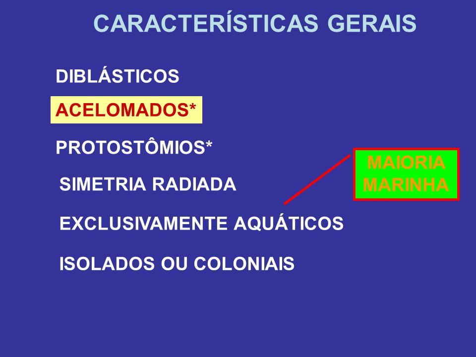 ISOLADOS OU COLONIAIS CARACTERÍSTICAS GERAIS DIBLÁSTICOS ACELOMADOS* PROTOSTÔMIOS* SIMETRIA RADIADA EXCLUSIVAMENTE AQUÁTICOS MAIORIA MARINHA
