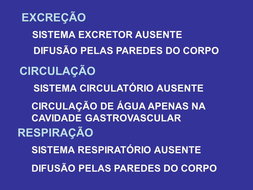 EXCREÇÃO. DIFUSÃO PELAS PAREDES DO CORPO SISTEMA EXCRETOR AUSENTE CIRCULAÇÃO CIRCULAÇÃO DE ÁGUA APENAS NA CAVIDADE GASTROVASCULAR SISTEMA CIRCULATÓRIO