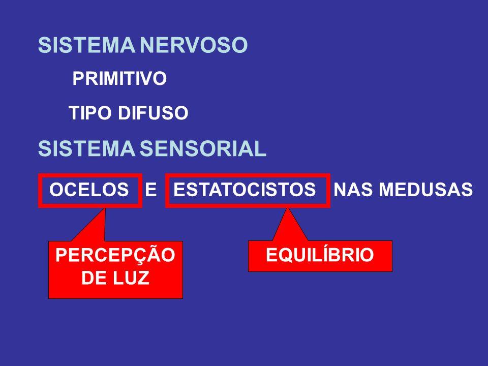 SISTEMA NERVOSO PRIMITIVO TIPO DIFUSO SISTEMA SENSORIAL OCELOS E ESTATOCISTOS NAS MEDUSAS PERCEPÇÃO DE LUZ EQUILÍBRIO