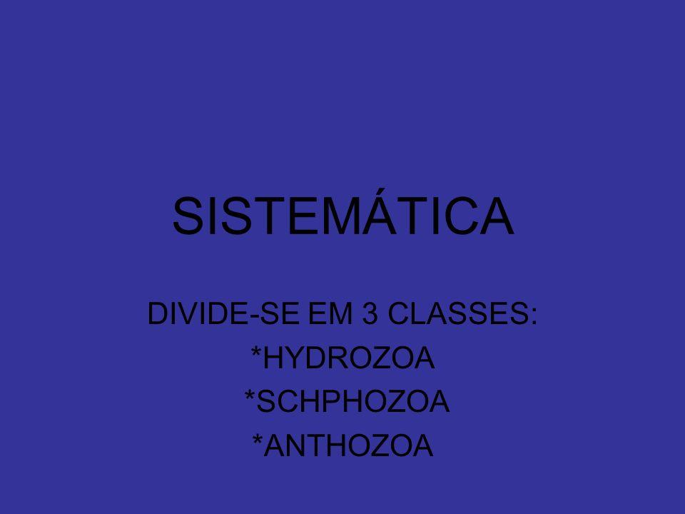 SISTEMÁTICA DIVIDE-SE EM 3 CLASSES: *HYDROZOA *SCHPHOZOA *ANTHOZOA