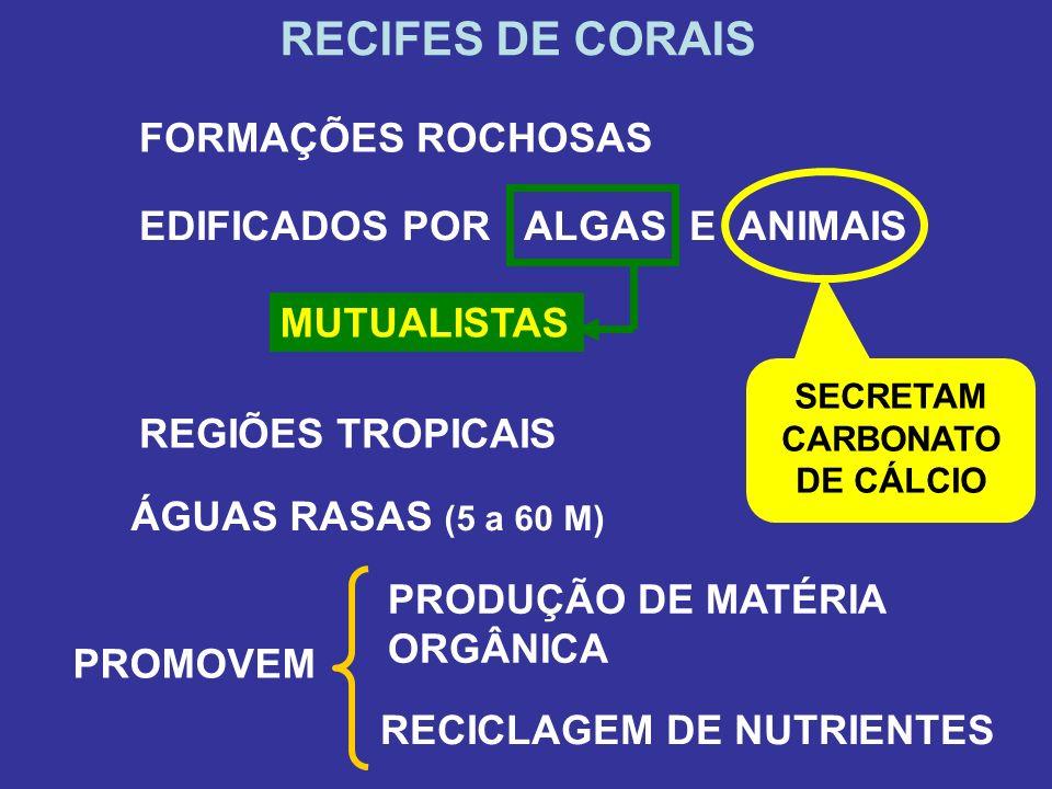 RECIFES DE CORAIS FORMAÇÕES ROCHOSAS EDIFICADOS POR ALGAS E ANIMAIS SECRETAM CARBONATO DE CÁLCIO REGIÕES TROPICAIS ÁGUAS RASAS (5 a 60 M) MUTUALISTAS