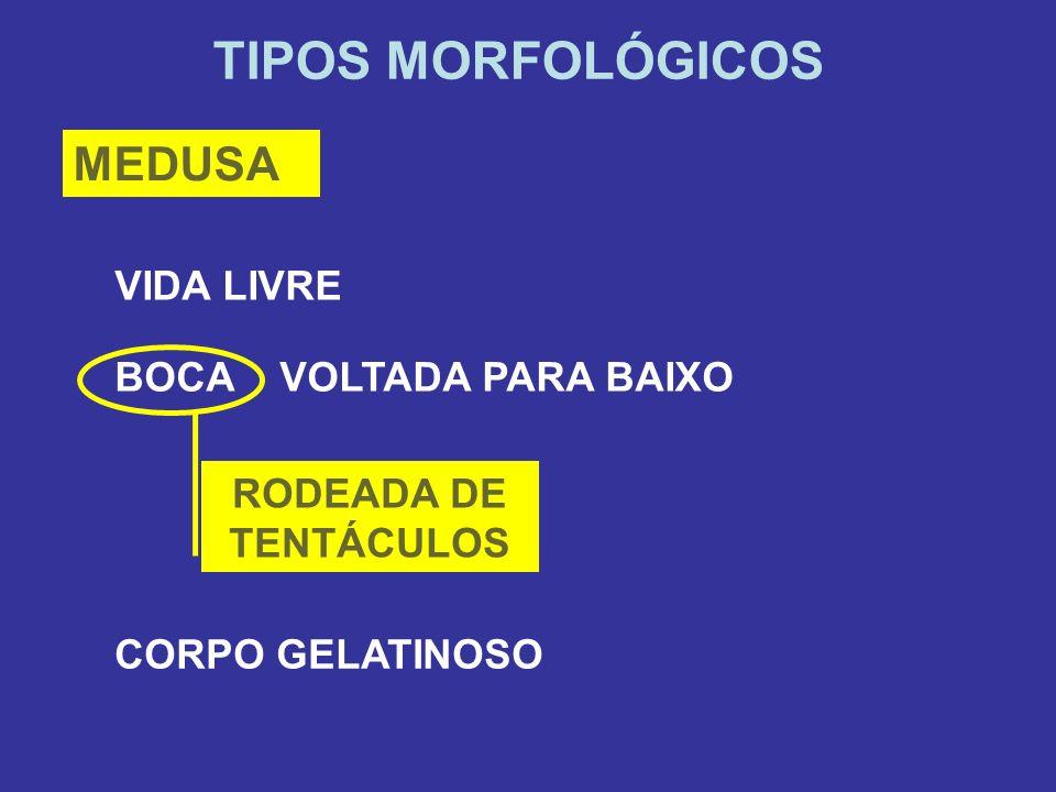 TIPOS MORFOLÓGICOS MEDUSA CORPO GELATINOSO VIDA LIVRE BOCA VOLTADA PARA BAIXO RODEADA DE TENTÁCULOS