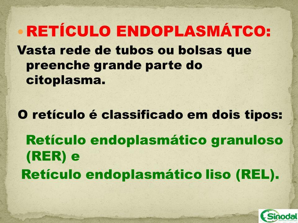 RETÍCULO ENDOPLASMÁTCO: Vasta rede de tubos ou bolsas que preenche grande parte do citoplasma. O retículo é classificado em dois tipos: Retículo endop