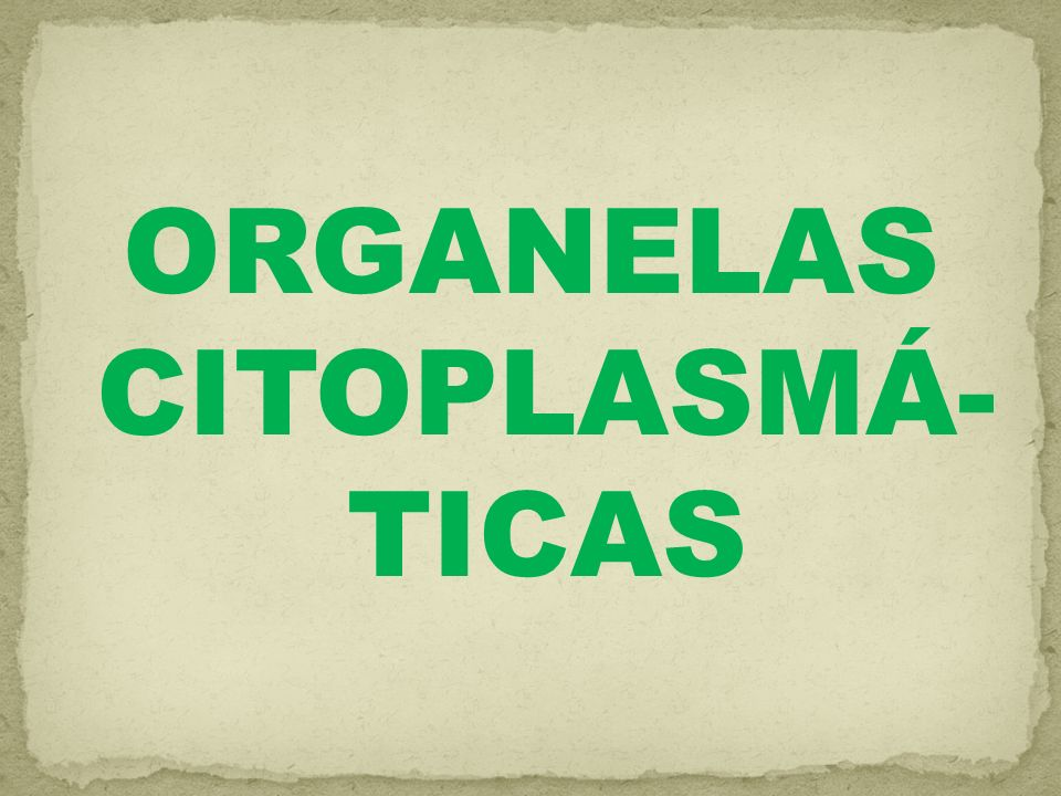 MITOCÔNDRIAS: são organelas alongadas e com forma de bastões com cerca de 2µm e comprimento.