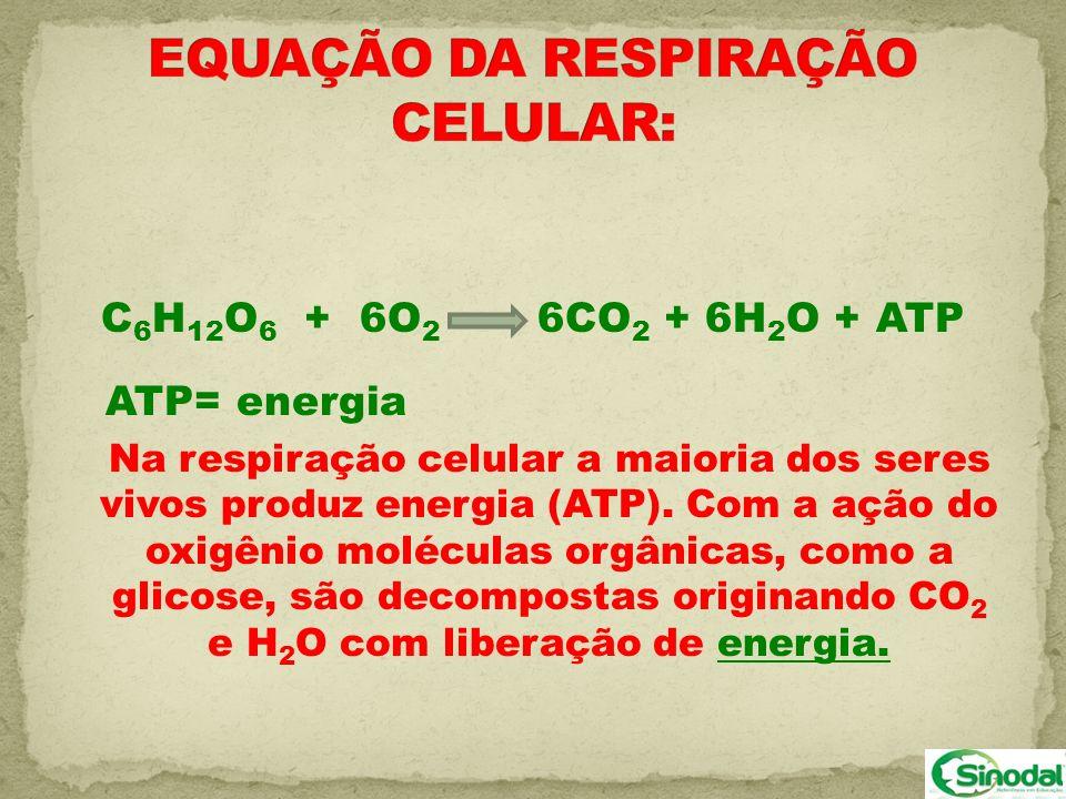 C 6 H 12 O 6 + 6O 2 6CO 2 + 6H 2 O + ATP ATP= energia Na respiração celular a maioria dos seres vivos produz energia (ATP). Com a ação do oxigênio mol