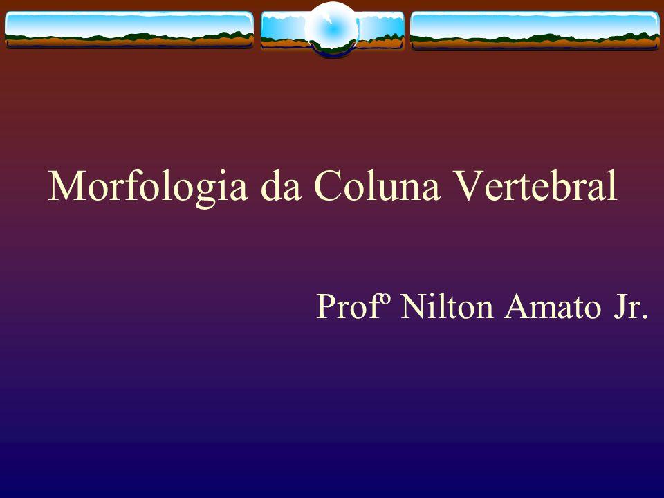 Morfologia da Coluna Vertebral Profº Nilton Amato Jr.