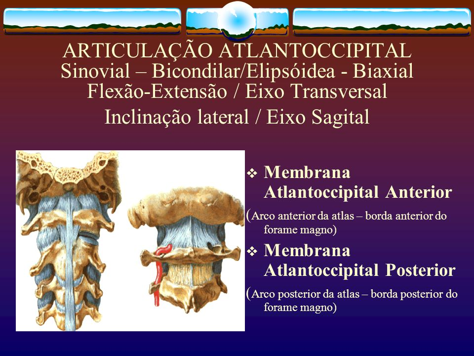ARTICULAÇÃO ATLANTOCCIPITAL Sinovial – Bicondilar/Elipsóidea - Biaxial Flexão-Extensão / Eixo Transversal Inclinação lateral / Eixo Sagital Membrana A