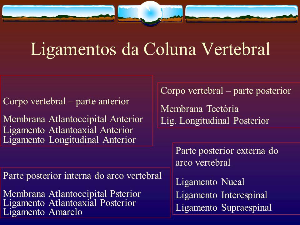 Ligamentos da Coluna Vertebral Corpo vertebral – parte anterior Membrana Atlantoccipital Anterior Ligamento Atlantoaxial Anterior Ligamento Longitudin
