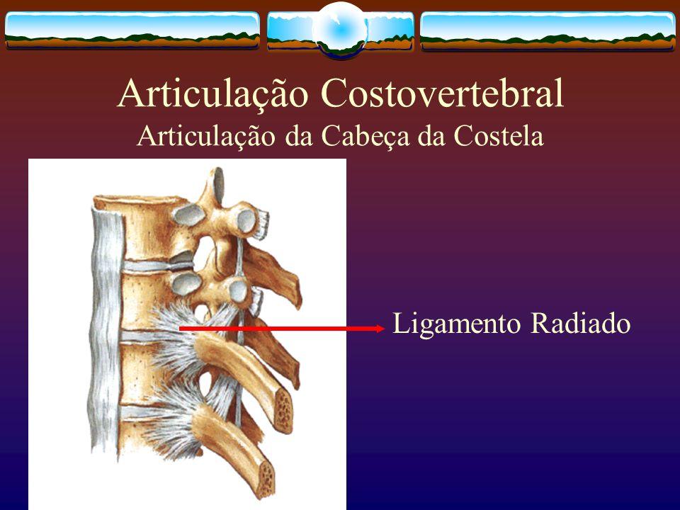 Articulação Costovertebral Articulação da Cabeça da Costela Ligamento Radiado