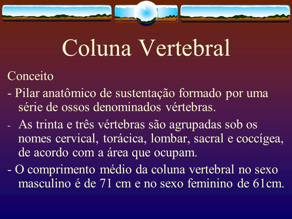 Coluna Vertebral Conceito - Pilar anatômico de sustentação formado por uma série de ossos denominados vértebras. - As trinta e três vértebras são agru