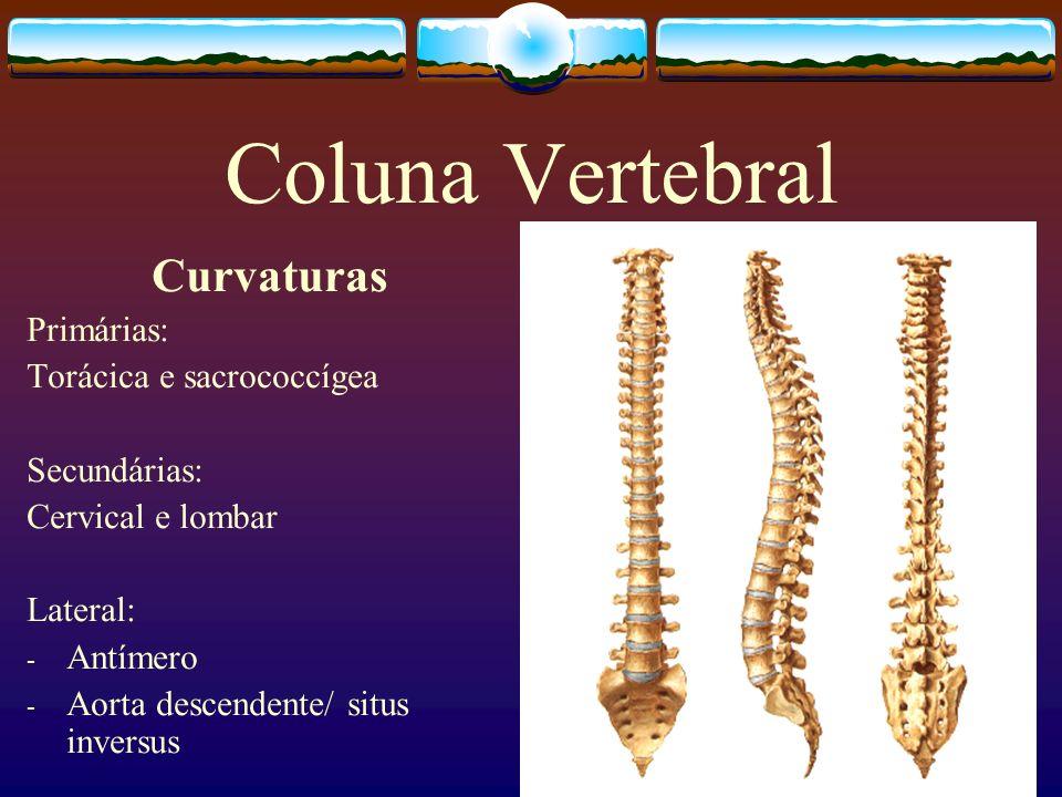 Articulação Atlantoaxial Mediana Sinovial - Trocóidea Ligamento Cruciforme Lig.