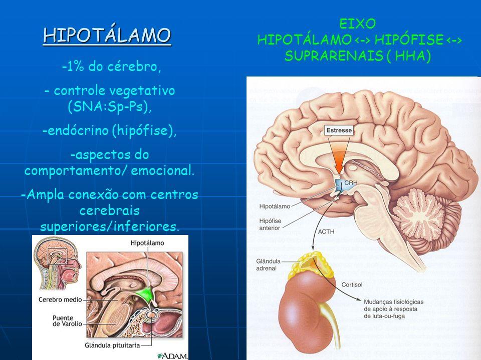 HIPOTÁLAMO -1% do cérebro, - controle vegetativo (SNA:Sp-Ps), -endócrino (hipófise), -aspectos do comportamento/ emocional. -Ampla conexão com centros