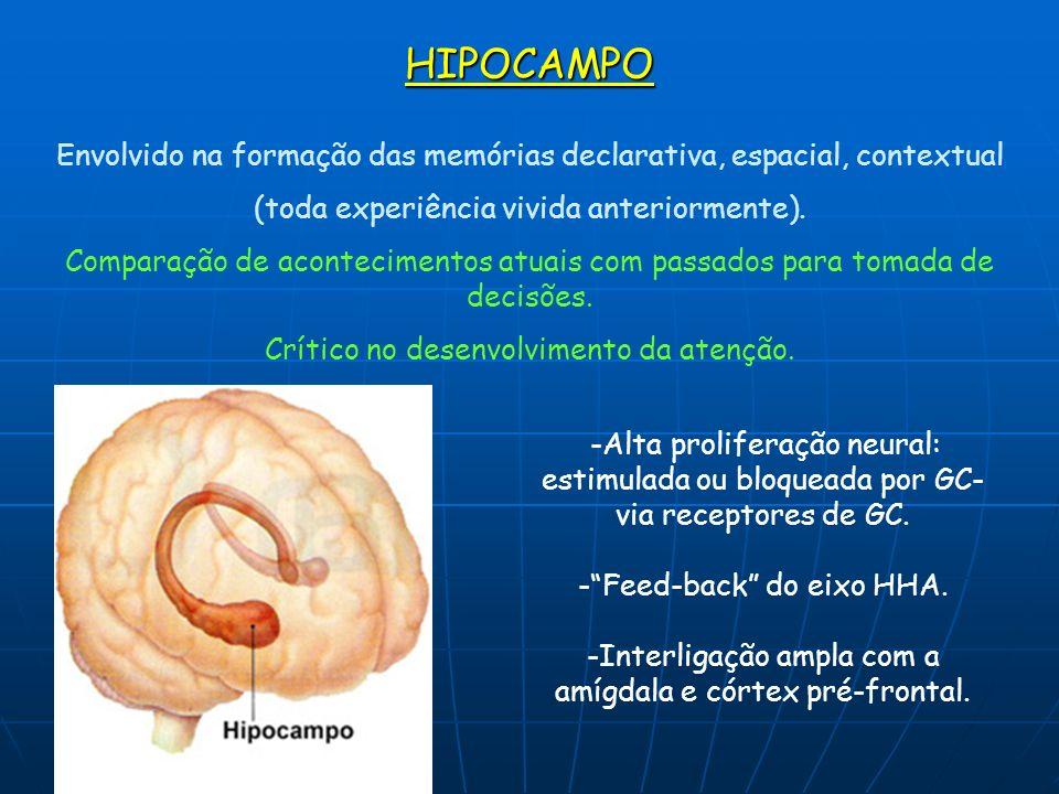 HIPOCAMPO Envolvido na formação das memórias declarativa, espacial, contextual (toda experiência vivida anteriormente). Comparação de acontecimentos a
