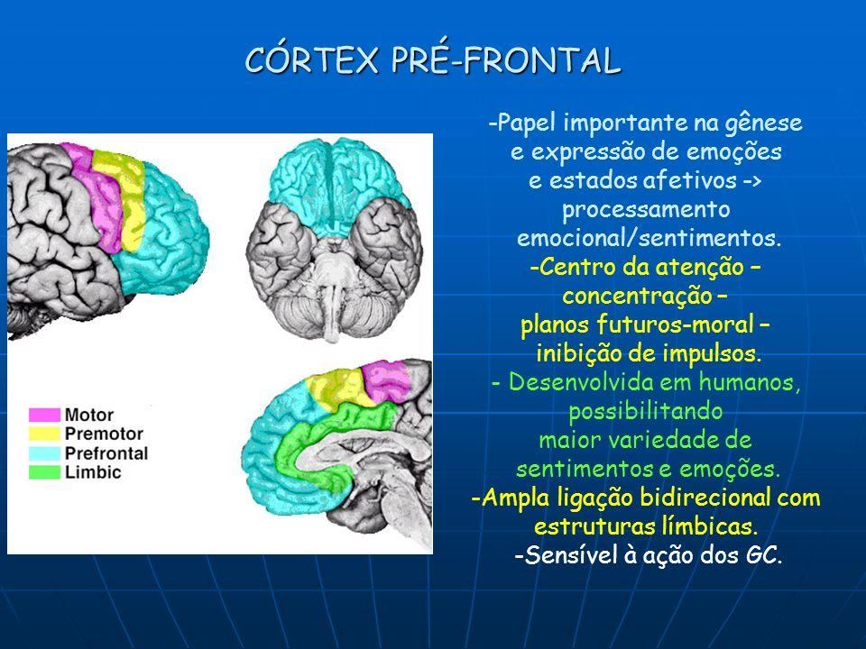 CÓRTEX PRÉ-FRONTAL -Papel importante na gênese e expressão de emoções e estados afetivos -> processamento emocional/sentimentos. -Centro da atenção –