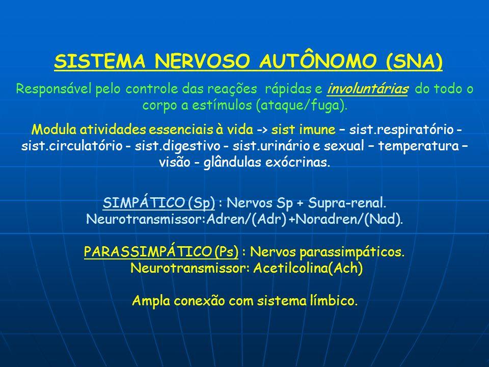 SISTEMA NERVOSO AUTÔNOMO (SNA) Responsável pelo controle das reações rápidas e involuntárias do todo o corpo a estímulos (ataque/fuga). Modula ativida