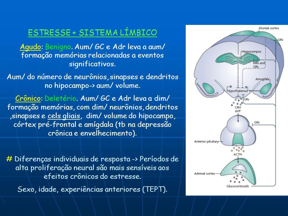 ESTRESSE + SISTEMA LÍMBICO Agudo: Benigno. Aum/ GC e Adr leva a aum/ formação memórias relacionadas a eventos significativos. Aum/ do número de neurôn